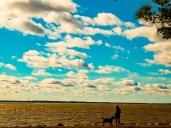 naturedogwalking